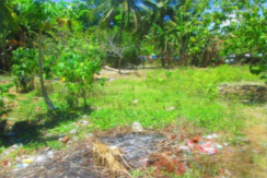 600 sqm Farmlot For Sale in Gloria, Oriental Mindoro